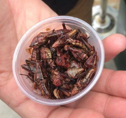 The Seattle Mariners Are Serving Toasted Grasshoppers And Guess What
